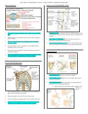Posterior Shoulder & Arm (2).pdf
