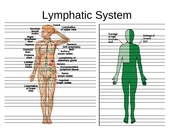 Lecture 25 Lymphatic System diagrams(1)