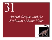 Lecture_28_ArdellF09_Bio001_Animals