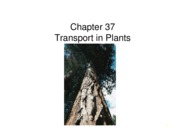 chapter_37_powerpoint