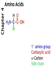 Chapter 4_ Amino Acids