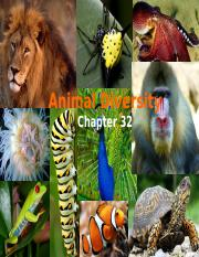 Lecture 17-Animal diversity.ppt