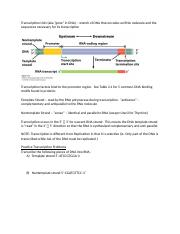 Transcription and RNA Processing.docx