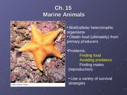 Lecture12MarineAnimalsIII