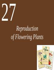 Ch27 Lecture Reproduction of Flowering Plants