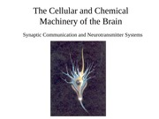 Lecture5B-W-NeurotransmitterSystems