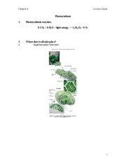 L7photosynthesis_sp10