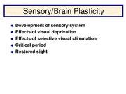 Lecture 19 sensory plasticity