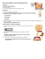 anim_mechanical_digestion_gastrointestinal_tract_worksheet (1)(1)