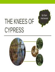 The Knees of Cypress.pptx