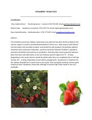 STRAWBERRY  PRODUCTION12.docx
