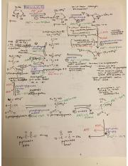 Glycolysis (from class notes).JPG