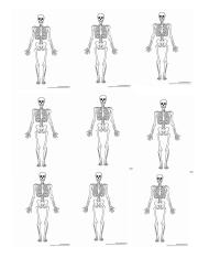 blank skeleton and muscles.docx