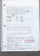 Lecture 6 Notes Biology