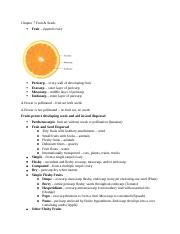 Outline Chapter 7 Fruit.docx
