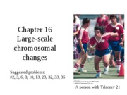 Chapter 16 Large-scale chromosomal changes