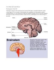 ch 13 brain and cranial nerves.docx