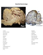 Sheep Brain Dissection Images.pdf