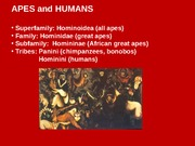 Apes%20and%20HumansA