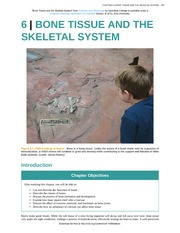Chapter 6 - Bone Tissue and the Skeletal System