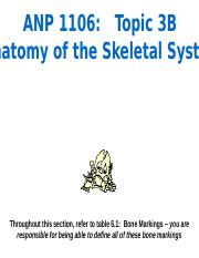 Topic3B - Anatomy of the skeletal system