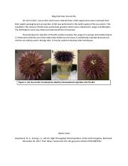Blog Post One. Sea Urchins.docx