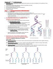 Copy of Chapter 11: DNA Replication.docx
