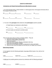 Genetics Worksheet - GENETICS WORKSHEET Introduction and Simple ...