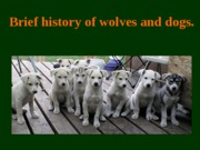 History_of_wolves_and_dogs_for_angel__Fa