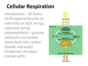 Notes 06 Cellular Respiration