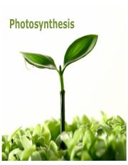 Lec06 - Photosynthesis.pdf