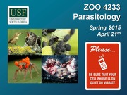 ZOO4233_April_21_Parasitic_Arthopods_VI