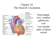 Chapter_14_Heart_and_Circulation