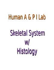 API Lab 5 Skeletal Sys (1)