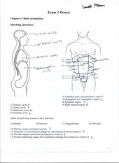 BIOL 246 Test 1 study guide matching body parts