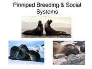 9 Pinniped Social _ Breeding Systems_2015