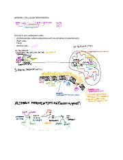 Cell Respiration And Photosynthesis Class Notes