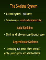 Axial Skeleton.ppt