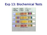 MCB301 Fall 2014 Lecture Handout 6 Oct 17 Biochemical Tests