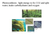 3_7_photosynthesis