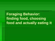 Lecture 10 -Foraging Behavior - 2011 Fall
