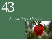 Ch43 Lecture-Animal Reproduction
