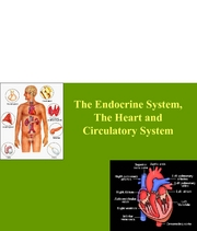 Lab 7 - The Endocrine System, The Heart and Circulatory S07