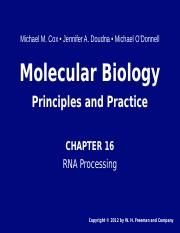 Chapter 16 RNA processing 2.ppt