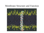 Membranes Structure and Function 10.9