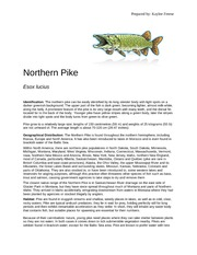 Northern Pike Report