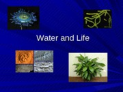 Lecture 3 Water and Life