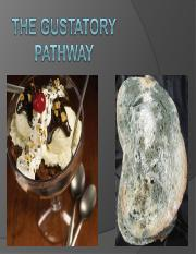 The gustatory pathwayold.ppt