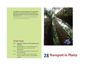 CHAPTER 28 PLANT TRANSPORT