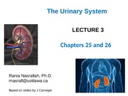 ANP1107 Renal lecture 3 RN_June 24 2015website version